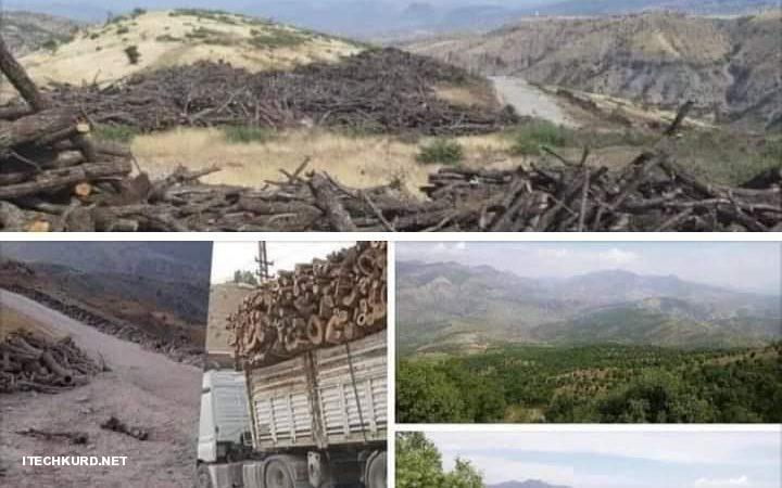 تورک تەنیا دژی PKK نییە.